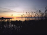 Marsh Grasses and Sunset Photographic Print by Medford Taylor