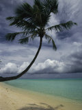 Lone Palm Tree and its Shadow on a South Pacific Beach Photographie par Todd Gipstein