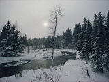 Winter View of Itasca State Park Photographic Print by James L. Stanfield