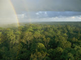 A Rainbow Arches over the Rain Forest Photographic Print by Darlyne A. Murawski