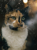 Portrait of a Cat Photographic Print by James L. Stanfield