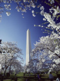 Washington Monument with Spring Tree Blossoms Photographic Print by Richard Nowitz