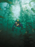 A Diver Exploring a Forest of Giant Kelp Photographic Print by Wolcott Henry