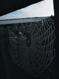 A Bedewed Spider Web in a Dark Shed Photographic Print by James L. Stanfield