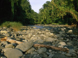Stone-Filled Creek in a Woodland Setting Photographic Print by Tim Laman