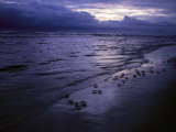 Twilight View of Crabs Scuttling along the Beach Photographic Print by Michael Nichols