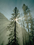 Rays of Sunlight Beam Through the Mist and Boughs of Towering Evergreen Trees Photographic Print by Paul Chesley