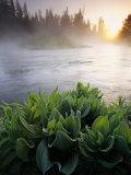 Mist over Oregons Crescent Creek in the Cascade Range Photographic Print by Phil Schermeister