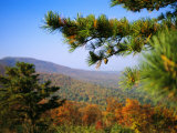 Pine Tree and Forested Ridges of the Blue Ridge Mountains Photographic Print by Raymond Gehman