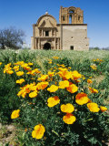 California Poppies Grow near Tumacacori Mission Photographie par Rich Reid