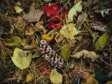 Pine Needles and Cones, and Autumn Leaves Along the Appalachian Trail Photographic Print by Raymond Gehman