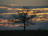 Sunset at Big Meadows with Bare Tree Photographic Print by Raymond Gehman