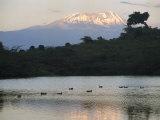 Mount Kilimanjaro Rises above One of Tanzanias Momela Lakes Fotografie-Druck von Richard Nowitz