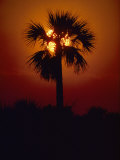 Silhouette of a Palm Tree Shot against a Setting Sun Photographic Print by Kenneth Garrett