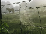 Spider Web on a Wire Fence Photographic Print by James L. Stanfield