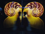 A Person Walks by a Reflective Print of a Nautilus Shell Hanging in a Marine Museum Photographic Print by Jodi Cobb