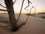 A Twilight View of Driftwood in the Dunes Photographic Print by Phil Schermeister