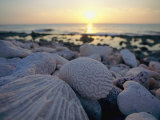 Close up of Shells and Pebbles on a Beach Photographic Print by Bill Curtsinger