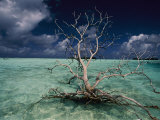 A Tree Floats in the Crystal-Clear Waters of Palmyra Atoll Photographic Print by Randy Olson