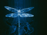 A Model of a Dragonfly in a Wind Tunnel Shows the Pattern of Air Passing over the Insect Impressão fotográfica por Paul Chesley