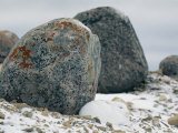 Arctic Hare Resting Near a Boulder Photographic Print by Norbert Rosing