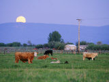 Farm Scene West of Chiloguin, Oregon Photographic Print by Phil Schermeister