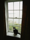 A Cat Sitting on a Windowsill Photographic Print by Bill Curtsinger