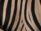 A Close View of a Zebras Stripes Photographic Print by Michael Nichols