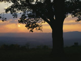 Sunset and Silhouetted Oak Tree over the Shenandoah Valley, Dickeys Ridge Visitors Center Photographic Print by Raymond Gehman