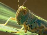 Grasshopper Photographic Print by Darlyne A. Murawski