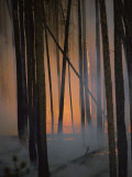 Smoke Drifts Among Charred Tree Trunks as Flames Glow Behind Photographic Print by Michael S. Quinton