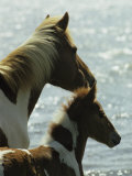 Wild Pony and Foal Looking Out at the Water Photographic Print by James L. Stanfield