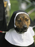 Pet Dog Dressed as a Nun during a Halloween Celebration Photographic Print by Richard Nowitz