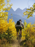Cyclist Biking Through Trees with Autumn Foliage Fotoprint van Mark Cosslett