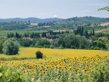 Champ de tournesols Photographie par Richard Nowitz
