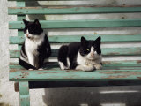 A Pair of Cats on a Bench Photographic Print by James L. Stanfield