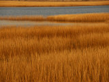 Salt Marsh with Cordgrass at Toms Cove on the Atlantic Ocean Photographic Print by Raymond Gehman
