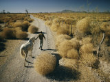 A Man Leads a Horse Down a Dirt Road Photographic Print by Walter Meayers Edwards