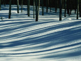 Winter Woodland View of a Lodgepole Pine Forest in Wyoming Photographic Print by Raymond Gehman