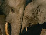 Un'elefantesssa con il suo cucciolo Stampa fotografica di Fay, Michael