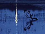 Herons Silhouetted on a Branch in a Chincoteague Marsh Lámina fotográfica por Medford Taylor