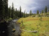Bechler Meadows, Yellowstone National Park, Wyoming Stampa fotografica di Gehman, Raymond