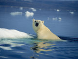 Polar Bear, Wager Bay, Northwest Territories, Canada Photographie par Joe Stancampiano