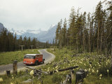 Goldenrod Beside a Road in Glacier National Park Photographic Print by Maynard Owen Williams