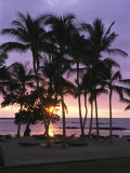 Coconut Trees Silhouetted on Mauna Lani Bay Hotels Beach at Sunset Reproduction photographique par Richard Nowitz