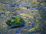 Moss-Covered Rocks in the Bechler River, Yellowstone National Park Photographic Print by Raymond Gehman