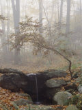 Japanese Maple Trees in the Fog in a Japanese Garden Photographic Print by Darlyne A. Murawski