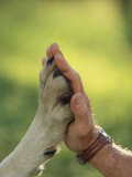 Jim Dutcher Places His Hand to the Paw of a Gray Wolf, Canis Lupus Fotografie-Druck von Jim And Jamie Dutcher