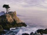 Lone Cypress Tree on a Rocky Point Near Pebble Beach Fotografisk tryk af Mark Cosslett