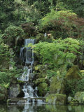 Japanese Garden in Portland Photographic Print by Darlyne A. Murawski